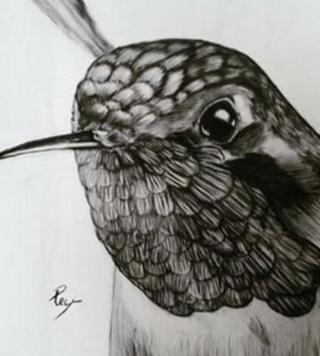Rey Mora - Hummingbird